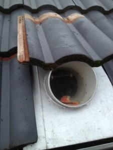 Possum Removal Melbourne Possum Pest Control Melbourne