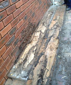 termite-damages-stored-timber