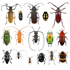 Types of Beetles