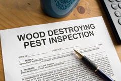 wood-destroying-pest-inspection
