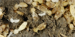 7 Signs Of A Termite Infestation